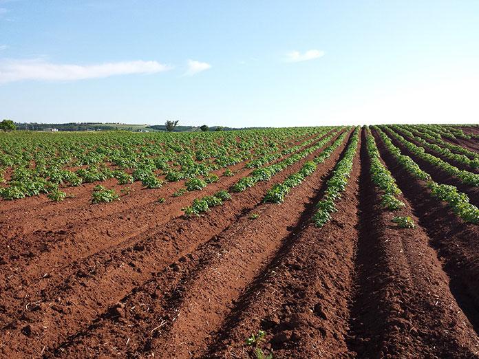 Uprawa zbóż